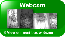 View our nest box webcam